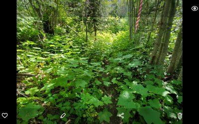 Natalie km 22 – Trail overgrown